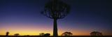 Africa, Namibia, Kokerboom Preserve, Quiver Tree Fotografisk tryk