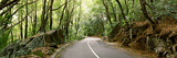 Road Passing Through an Indigenous Forest, Mahe Island, Seychelles Photographic Print