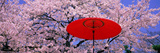 Red Umbrella and Cherry Blossoms Hikone Shiga Japan Photographic Print
