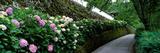 Old Wall with Hydrangea Hasedera-Sando Sakurai Nara Japan Photographic Print