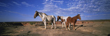 Wild Ponies Nm USA Photographic Print