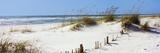 Tall Grass on the Beach, Perdido Key Area, Gulf Islands National Seashore, Pensacola, Florida, USA Fotografisk trykk