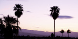 Silhouette of Palm Trees at Dusk, Palm Springs, Riverside County, California, USA Photographic Print