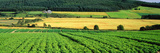 Potato Field Munlochy Bay Black Isle Scotland Photographic Print