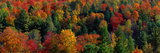 Autumn Leaves Vermont USA Photographic Print
