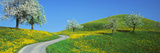 Winding Road Canton Switzerland Photographic Print