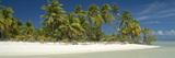 Palm Trees on the Beach, Tapuaetai Motu, Aitutaki, Cook Islands Photographic Print