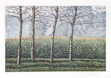 Birches and Corn Field Collectable Print by Oliviero Masi