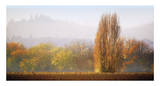 Vineyard Mist Giclee Print by Lance Kuehne