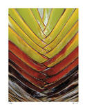 Vertical Color Palm Giclee Print by John Gynell
