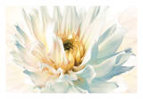 Painted Petals II Giclee Print by Christine Elizabeth