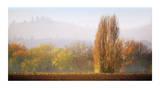 Vineyard Mist Premium Giclee Print by Lance Kuehne