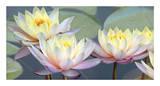 Lotus Panorama Giclée-Druck von Diego Ceja