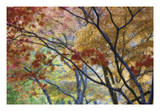 Lithia Park Fall 3 Giclee Print by Don Paulson