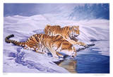 Siberian Tigers Limited Edition by Sydney Taylor