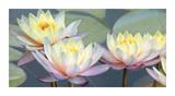 Lotus Panorama Premium Giclee Print by Diego Ceja