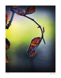 Autumn Morning Giclee Print by Michelle Wermuth