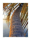 Sunset Palm Islamorada Giclee Print by John Gynell