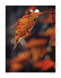 Fall Flames Giclee Print by Michelle Wermuth