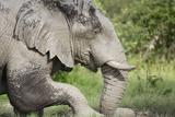 Elephant at Savuti Marsh in Chobe National Park Photographic Print