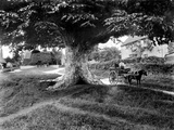 Denton, Oxfordshire, a Picturesque Village Scene Photographic Print by Henry Taunt