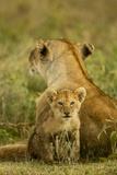 Lion Cub with Mother Fotografie-Druck
