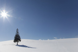 Evergreen Tree in Snowy Field, Biei, Hokkaido, Japan Photographic Print