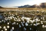 Arctic Landscape, Svalbard Photographic Print