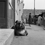 A Bulldog Lying by a Doorstep in the Foreground, with People at Stalls at a Street Market Behind Photographic Print by John Gay