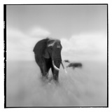Elephant Herd, Masai Mara Game Reserve, Kenya Photographic Print