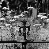 Highgate Cemetery, London, Detailed View of Ironwork and Wild Flowers Photographic Print by John Gay