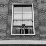 A Boxer Dog Looking Out of an Upper Floor Window of a Brick-Built House Photographic Print by John Gay