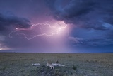 Lightning Above Cheetah with Adolescent Cubs on Termite Mound Photographic Print