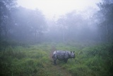 Indian Rhinoceros Standing in Morning Fog Photographic Print