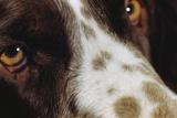 Close-Up of Dog Photographic Print