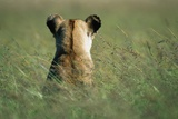 Lioness Sitting in Tall Grass Photographic Print