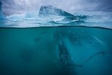 Icebergs in Jokulsarlon, Iceland Photographic Print
