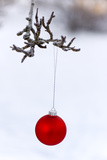 Close-Up of Red Bauble Hanging on Branch Against Blurred Background Photographic Print by Bjorn Andren