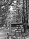 1980s Sign in Front of Wooded Area Reading Protect and Enjoy Your National Forests Photographic Print