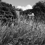 A Close-Up View of Wild Grasses Growing in the Somerset Countryside Photographic Print by John Gay