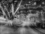 Highclere Castle, Hampshire, Looking Down a Road Which Runs Through the Park Photographic Print by Henry Taunt