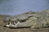 Close-Up of Nile Crocodile Photographic Print