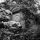 Highgate Cemetery, West Cemetery, London, the Sculpture of a Dog Guarding the Tomb of Thomas Sayers Photographic Print by John Gay