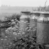 Three Milk Churns by Cow Parsley, Ashendon, Buckinghamshire Photographic Print by John Gay