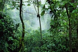 Mist Rising in Rainforest Fotografisk tryk