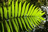 Lush Vegetation of Forest Floor at the Los Angeles Cloud Forest Reserve Photographic Print