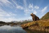 Brown Bear and Mountains, Katmai National Park, Alaska Photographic Print