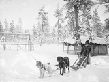 Man with Dogsled Photographic Print