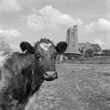 Church and Cow, East Sussex Photographic Print by John Gay