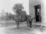 Blacksmith Shoeing a Horse Photographic Print